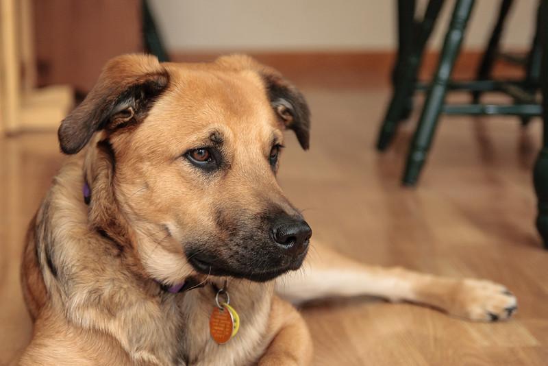 IMAGE: https://jaci.smugmug.com/Animals/Pets-and-Livestock/Cody/i-v6RWMdR/0/L/IMG_7698-4-L.jpg